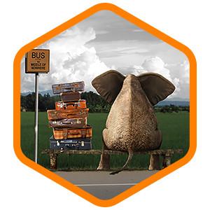 elephant-sitting